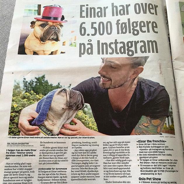 Einar The Frenchie