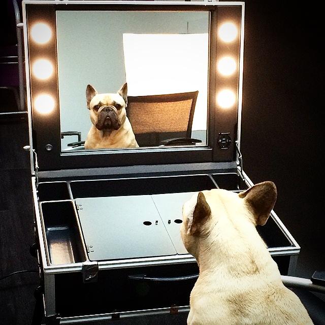 Ansiktspleie for hunder