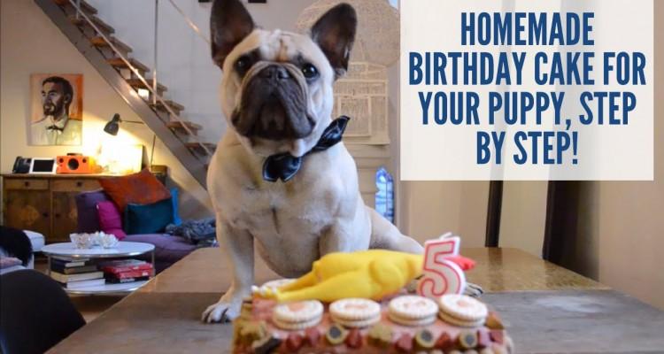 Slik lager du bursdagskake til hunden din